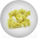 Smilový extrakt/ Helichrysum Stoechas Flower Extract*