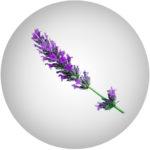 Levandulová květinová voda  – Lavandula Angustifolia Flower Water*
