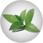 Mátová květinová voda/ Mentha Sativa Leaf Water*