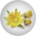 Extrakt z měsíčku/ MARIGOLD /Calendula Officinalis Flower Extract*
