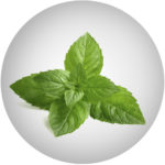 Mátový extrakt/ Mint / Mentha Piperita Leaf Extract*
