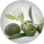 Olivový olej*