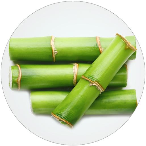 Bambus - Krása na míru